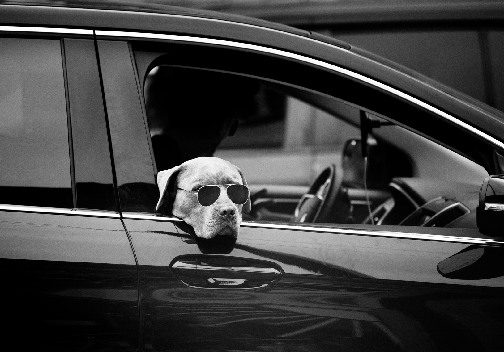 dog_sunglasses_car_web